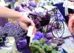 Lavender-festival-paso-robles